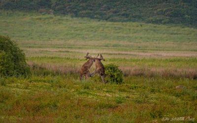 Wildlife Australiano: Los mejores lugares par ver animales en Australia