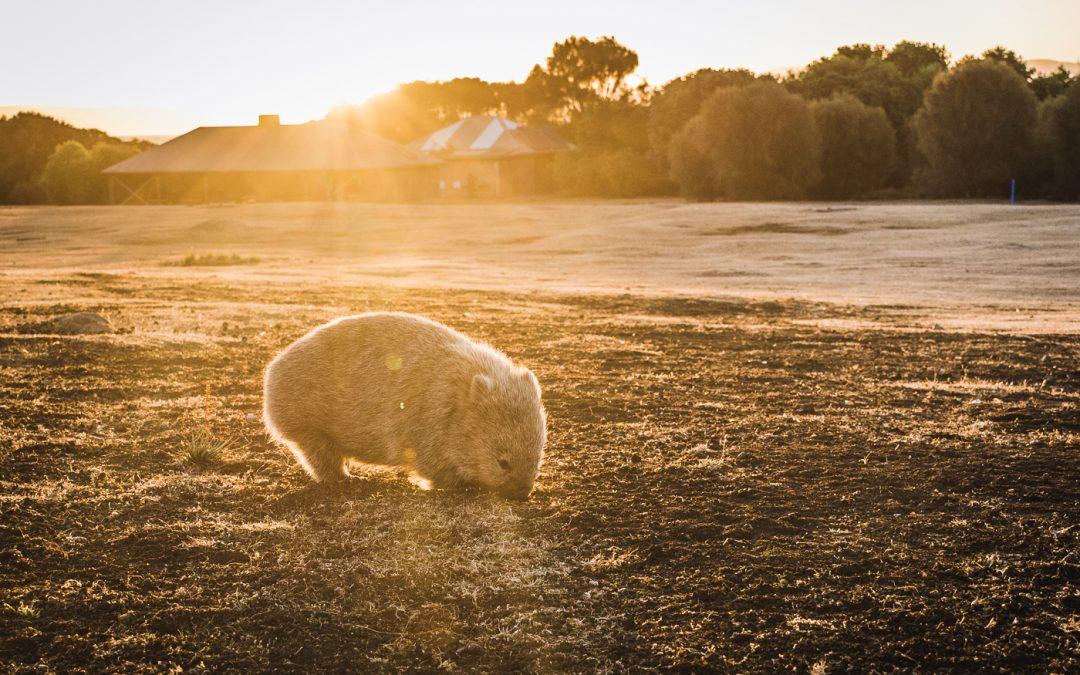 Maria Island – El Oasis de la Fauna en Australia