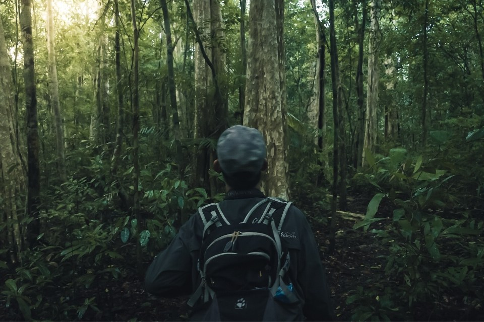 recorriendo la selva de cat tien buscando a los gibones