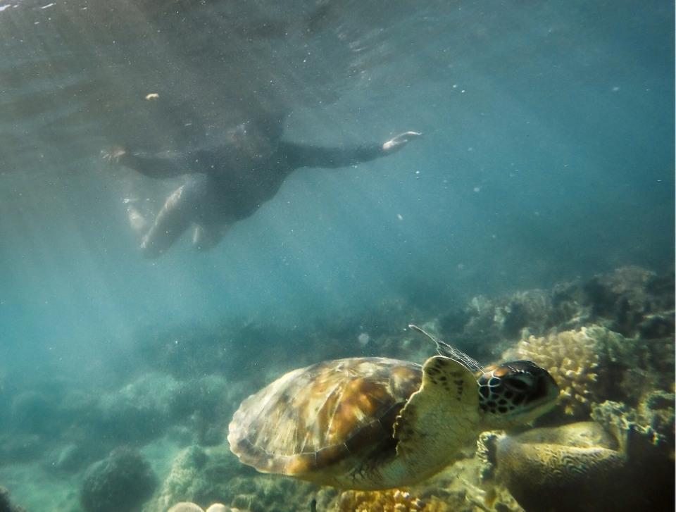 nadando con torturas en fitzroy island