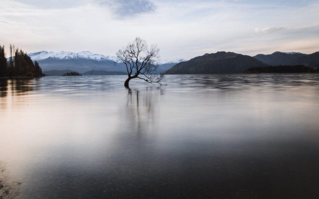 Paso a Paso Working Holiday Nueva Zelanda – Guía para postular