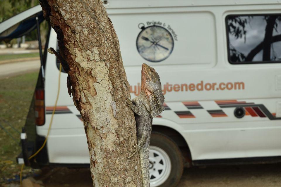 lagarto y La Bandida en Western Australia