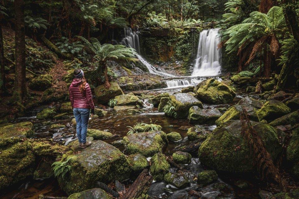 Cascadas en los bosques de Tarkine