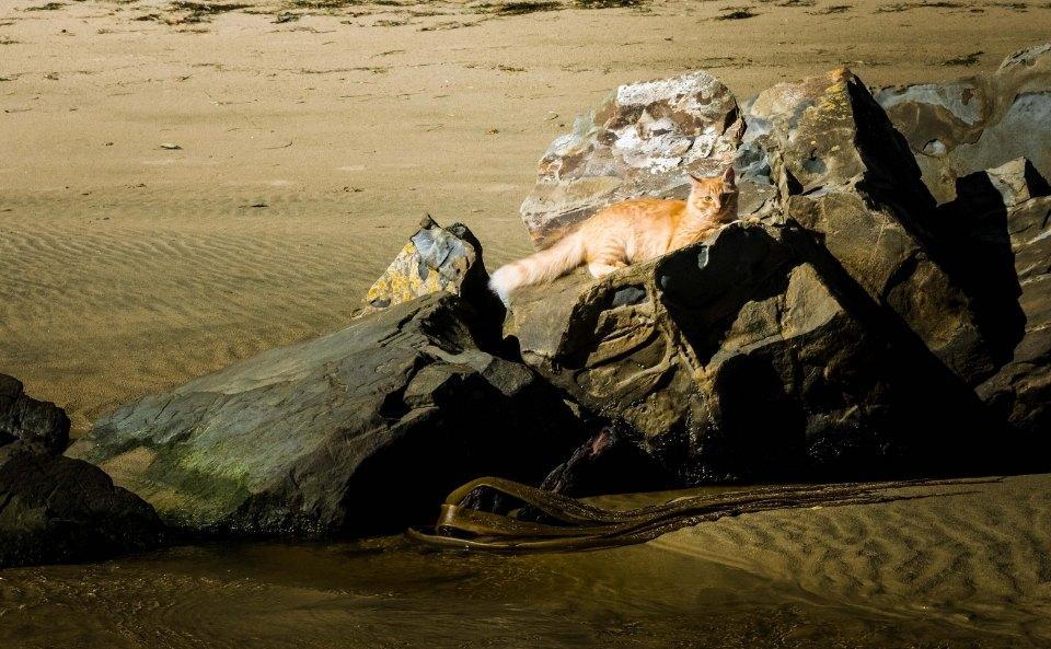 el gato rey sobre las rocas