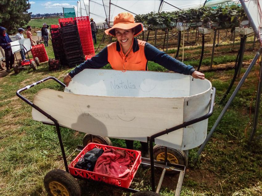 trabajando en los cultivos en Australia