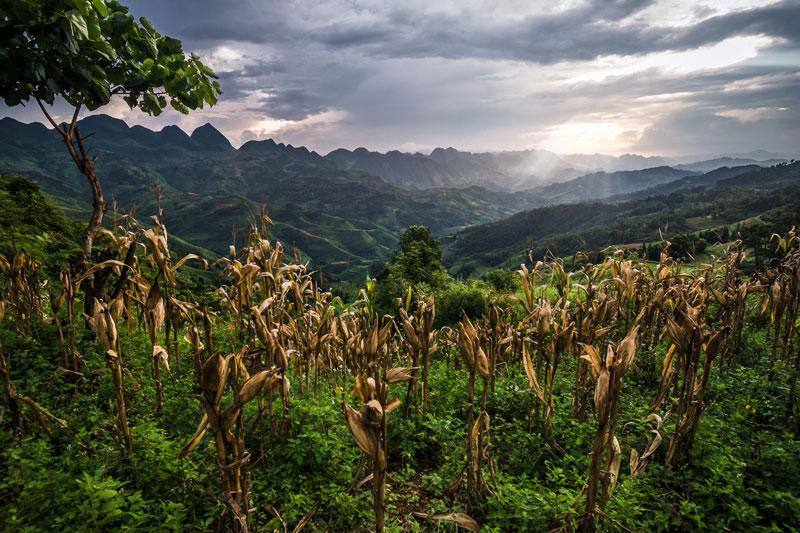 Campos de cultivos en Ha Giang Vietnam